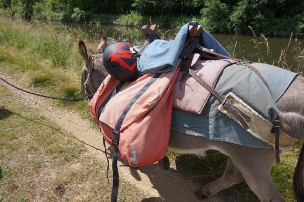 randonnee bougres dane  Randonnée avec un âne et des enfants en Bourgogne