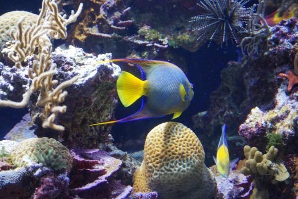 2779C3CF E7A1 48B2 BE98 6BC5F5FC5246 1024x684  Découverte du musée océanographique de Monaco