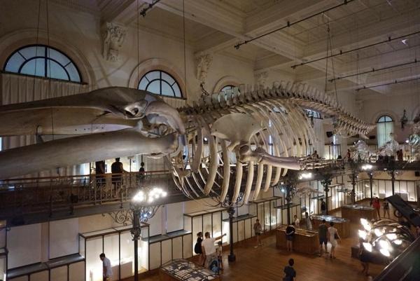 7AEE2C07 50F6 4D3D BF57 683A47AB69BB  Découverte du musée océanographique de Monaco