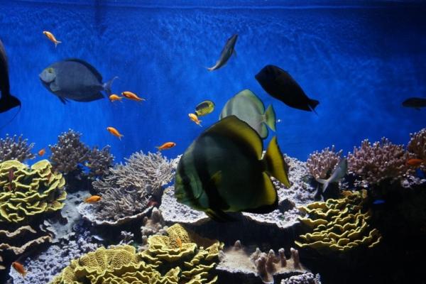A9D238CB 4153 4DE9 B286 A35931D68C18 1024x684  Découverte du musée océanographique de Monaco